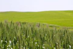 зеленое fild стоковая фотография