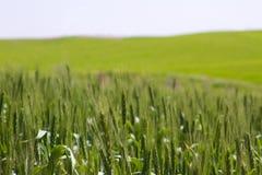 зеленое fild стоковая фотография rf