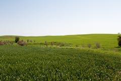 зеленое fild стоковые изображения rf