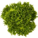 Зеленое frisee салата лист на белой изолированной предпосылке Стоковое Изображение
