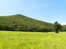Зеленое montain Стоковое Изображение RF