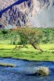 зеленое nubra River Valley ландшафта Индии Гималаев Стоковое Изображение RF