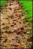 Зеленое Pinecones Стоковые Изображения RF