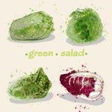 Зеленое salad11 Стоковые Изображения