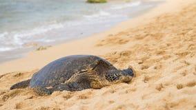 Зеленое seaturtle на пляже Стоковые Фото