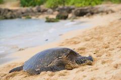 Зеленое seaturtle на пляже Стоковые Изображения RF