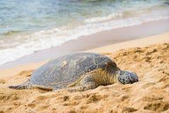 Зеленое seaturtle на пляже Стоковая Фотография