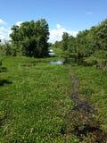Зеленое sunlit болото внешний Новый Орлеан Стоковое Изображение RF