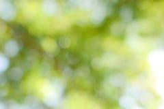 Зеленой предпосылка запачканная природой Стоковые Фото