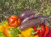 Зеленые баклажаны желтого и красного перца Стоковое фото RF