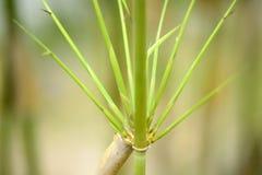 Зеленые бамбуковые ветви Стоковые Изображения