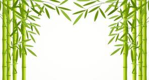 Зеленые бамбуковые стержни при листья изолированные на белой предпосылке Стоковое Изображение