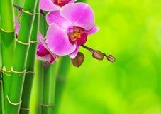 Зеленые бамбук и орхидея стоковые изображения