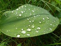 зеленые большие листья Стоковое Изображение