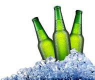 Зеленые бутылки в льде Стоковое Изображение RF