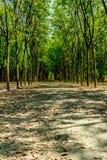 зеленые валы рядка Стоковые Фото