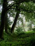 зеленые валы Стоковые Фото