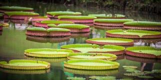 Зеленые водоросли в озере стоковая фотография