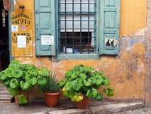 Зеленые горшечные растения вне старого кафа штукатурки, Греции Стоковая Фотография