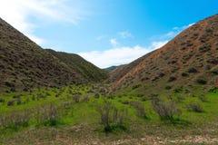 зеленые горы Стоковое фото RF