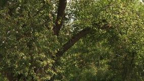 Зеленые густолиственные деревья в парке акции видеоматериалы