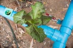 зеленые густолиственные овощи Стоковое Фото