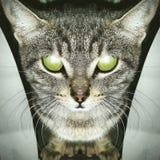 Зеленые глаза Стоковые Изображения