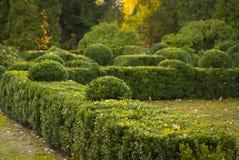 Зеленые декоративные кусты в парке города Стоковая Фотография
