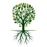 Зеленые дерево и корни весны также вектор иллюстрации притяжки corel Стоковые Фотографии RF