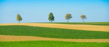 Зеленые деревья в поля на голубом небе, Шампань, Франция Стоковая Фотография RF