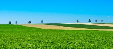 Зеленые деревья в поля на голубом небе, Шампань, Франция Стоковые Изображения RF