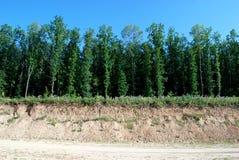 Зеленые деревья и заводы Стоковые Фото