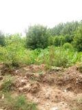 Зеленые деревья и заводы Стоковое Фото