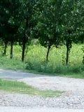 Зеленые деревья и заводы Стоковые Изображения