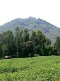 Зеленые деревья и зеленые горы Стоковое Изображение RF