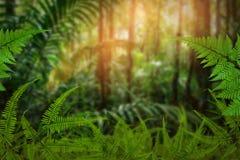 Зеленые деревья и растительность лист Стоковое Изображение RF