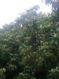 Зеленые деревья, красивый взгляд Стоковая Фотография RF
