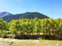 зеленые деревья около горы стоковое изображение rf
