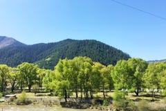 зеленые деревья около горы Стоковая Фотография