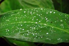 Зеленые лес и вода жизни Стоковые Изображения RF