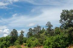 Зеленые лес и небо в внешних ландшафтах Стоковые Фотографии RF
