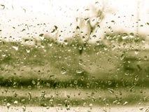 Зеленые детали дождевых капель в сезоне зимы Стоковые Фотографии RF
