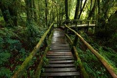зеленые джунгли Стоковое Фото