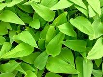 Зеленые заводы пруда Стоковое Изображение