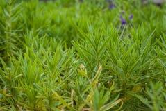 зеленые заводы Стоковая Фотография RF