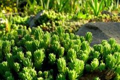 зеленые заводы Стоковые Изображения RF