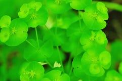 зеленые заводы Стоковое Фото