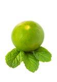 Зеленые известка и мята на белой предпосылке Стоковые Фотографии RF