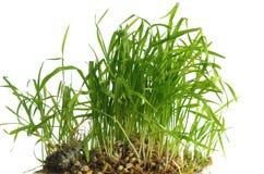 Зеленые изолированные хлопья Стоковая Фотография RF