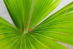 Зеленые длинные обои завода листьев стоковые изображения rf
